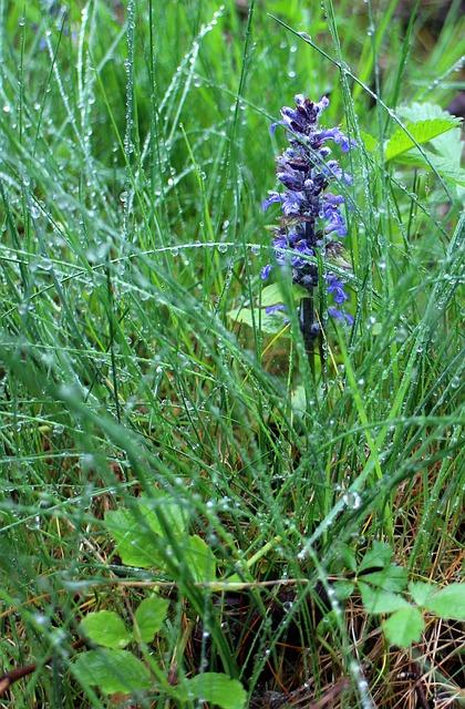 violette Blume 337177_640