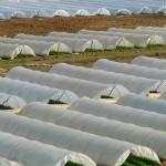 greenhouse-64394_640[1]