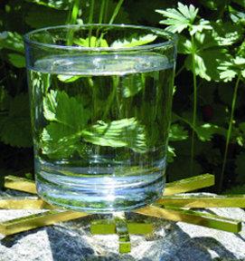 kleiner Wasserstern unter Glas Wasser